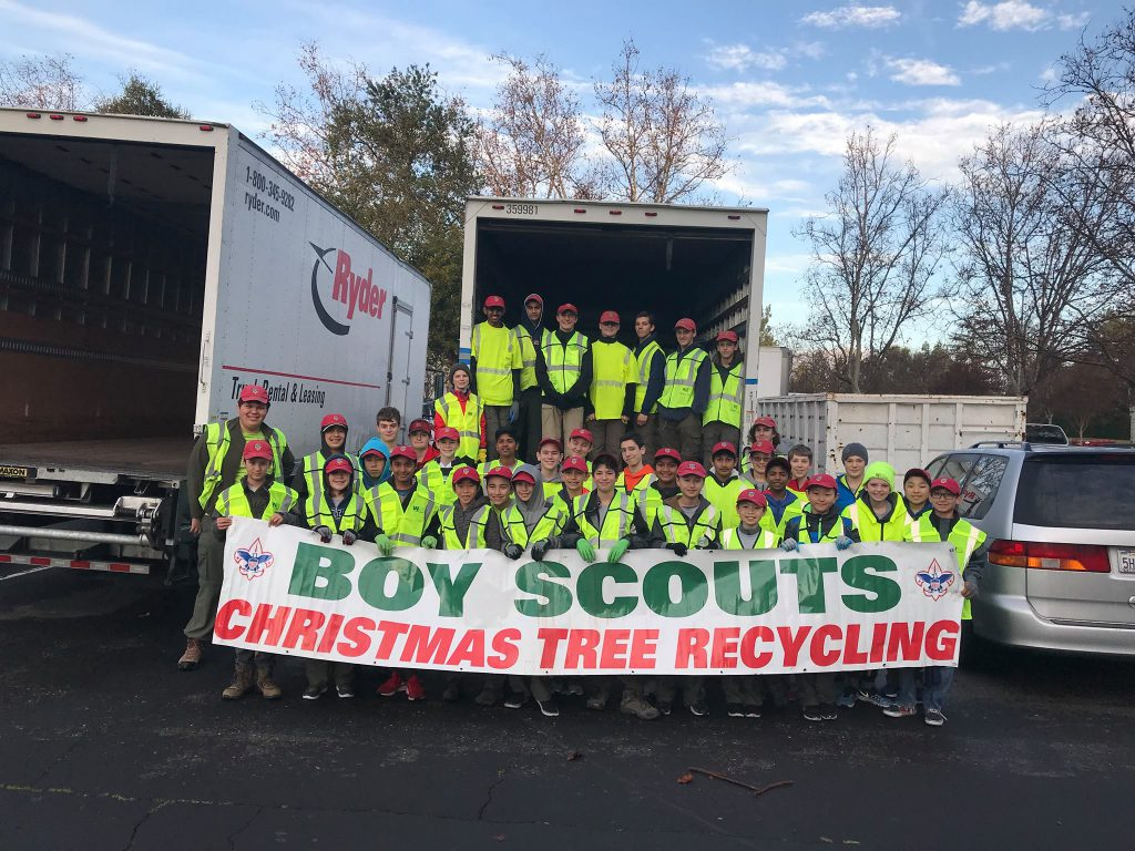 Troop 941 collecting trees